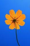Beautiful yellow flower. Petals closeup Royalty Free Stock Photo