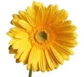 Beautiful yellow flower Stock Photos