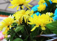 Beautiful yellow flower aster Royalty Free Stock Photos