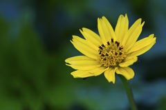 A beautiful yellow flower Stock Photography