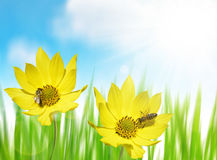 Beautiful yellow flower with bee Royalty Free Stock Photo