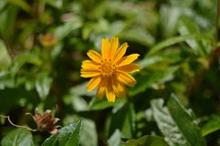 A beautiful yellow flower in focus. royalty free stock photos