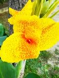 Beautiful and yellow Stock Image
