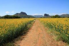 Beautiful yellow  flower garden landscape Stock Photo