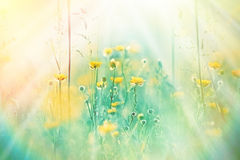 Beautiful yellow flower and grass Stock Photography