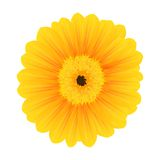 Beautiful Yellow Flower Stock Photos