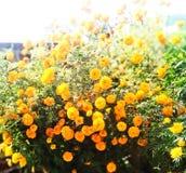 Beautiful Yellow Flower stock image