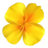 Beautiful yellow flower Royalty Free Stock Images