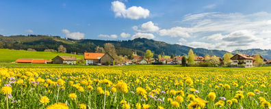 Beautiful yellow flower meadow and houses of a village. Beautiful yellow flower meadow with some village houses and barns stock photos