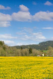 Beautiful yellow flower meadow and a ranch house in distance. Stock Photography