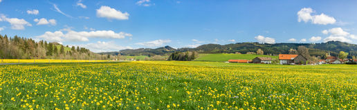 Beautiful yellow flower meadow with some houses and barns. Beautiful yellow flower meadow with some village houses and barns stock image