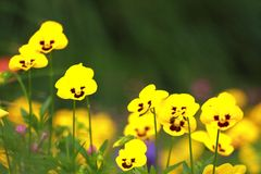 Beautiful yellow flower in a park Stock Images