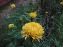 Beautiful yellow flower stock photography