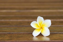 Beautiful yellow flower Stock Images