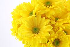 Beautiful yellow flowers Royalty Free Stock Photo