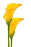 Beautiful yellow flowers Stock Photography