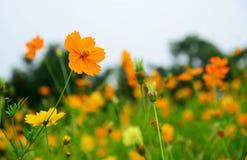 Beautiful yellow flowers background Stock Photo