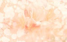Beautiful yellow flowers background Stock Photo
