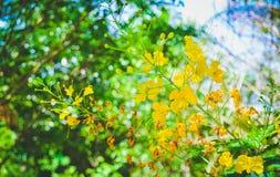 Beautiful yellow flowers are blooming. Morning sunbathing royalty free stock photo