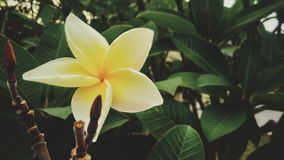Beautiful yellow flowers stock image