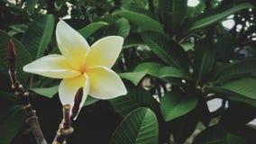 Beautiful yellow flowers royalty free stock photos