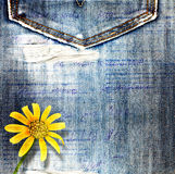 Beautiful yellow flowers on blue background jeans Royalty Free Stock Photo
