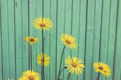 Beautiful yellow flowers on the blue wooden background Royalty Free Stock Photos