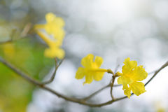Beautiful yellow flowers. Beautiful yellow flowers in the garden Stock Image