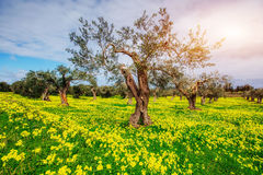 Beautiful yellow flowers in the garden of old trees Royalty Free Stock Photography