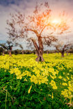 Beautiful yellow flowers in the garden of old trees. Royalty Free Stock Images