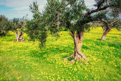 Beautiful yellow flowers in the garden of old trees Royalty Free Stock Image