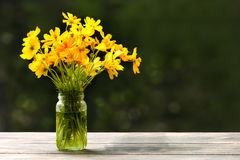 Beautiful Yellow flowers in glass bottle really bright Stock Images