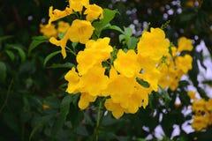 Beautiful of yellow flowers stock image