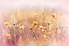 Beautiful yellow flowers in meadow Royalty Free Stock Images