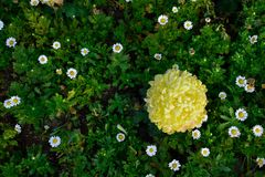 Beautiful yellow flowers. Nature concept royalty free stock photo