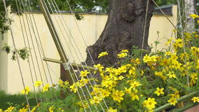 Beautiful yellow flowers swaying in the wind. Zoom out shot stock video