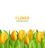 Beautiful Yellow Flowers Tulips Isolated. Illustration Beautiful Yellow Flowers Tulips Isolated on White Background, Nature Wallpaper - Vector vector illustration