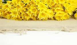 Beautiful yellow flowers on white background Royalty Free Stock Photos
