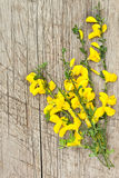 Beautiful yellow flowers on wooden rustic background Royalty Free Stock Photo