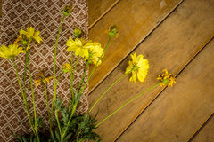 Beautiful yellow flowers wrapped in cotton. Stock Photography