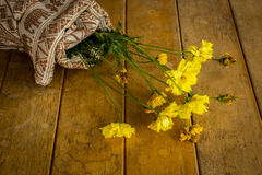 Beautiful yellow flowers wrapped in cotton. Royalty Free Stock Photography