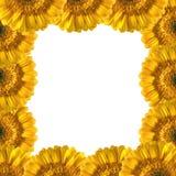 Beautiful Yellow Gerberas Frame