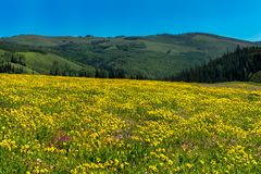 Beautiful wildflowers in a meadow with mountains in the background Stock Photos