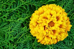 Beautiful yellow and green flowers background. Aster flowers. Top view Royalty Free Stock Photos