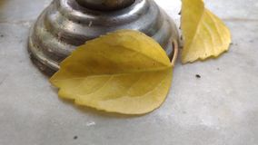 Beautiful Yellow leafs Royalty Free Stock Photography