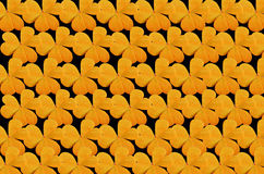 Beautiful yellow leaves of Water clover Stock Photography