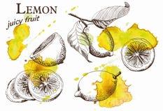 Beautiful yellow lemon Royalty Free Stock Images