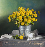 Beautiful yellow mums. Beautiful still life with yellow mums royalty free stock images