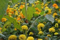 Orange and yellow stock image