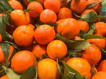 Beautiful yellow natural sweet tasty ripe soft round bright bright tangerines, fruits, clementines. Texture, background royalty free stock photography